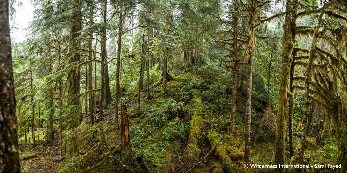 Nachhaltigkeit bei KYZR_Ein Blick in den Märchenwald