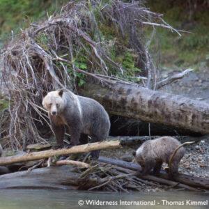 Nachhaltigkeit bei KYZR_Eine Grizzlymutter bringt ihren Jungen bei wie man Lachse fängt